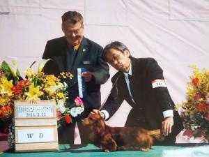 ジムダンディー JKCチャンピオン カニンヘンダックス 3.5kg シェーデットレッド
