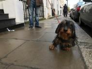 ロンドンで見かけた犬たち