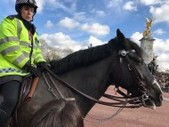 ロンドンで見かけた犬たち&馬