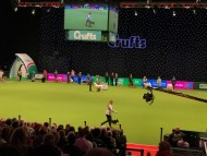 Crufts Best in Show 2017