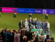 Crufts Best in Show 2017 最高賞はアメリカン・コッカー・スパニエル
