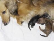 カニンヘンのユジンが6月26日出産しました。2頭です