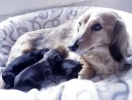 2014.2.19 カニンヘンのユジンが出産しました!