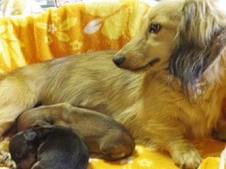 カニンヘンダックスのクレアが5月1日出産しました