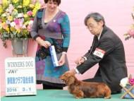 【ドックショー】静岡東クラブ連合会展にてジムダンディがウィナーズ