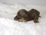 ローラmiの赤ちゃん チョコクリ女の子