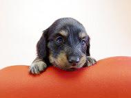 ユジンとジムダンディとの間に誕生した待望の子犬