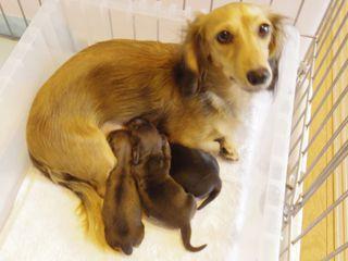 カニンヘンのティアラが10月11日出産しました