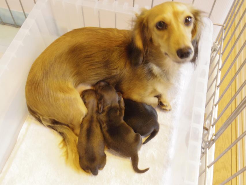 カニンヘンのティアラが10月11日出産