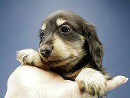 楓とオスカルの子犬 ブラッククリーム 男の子