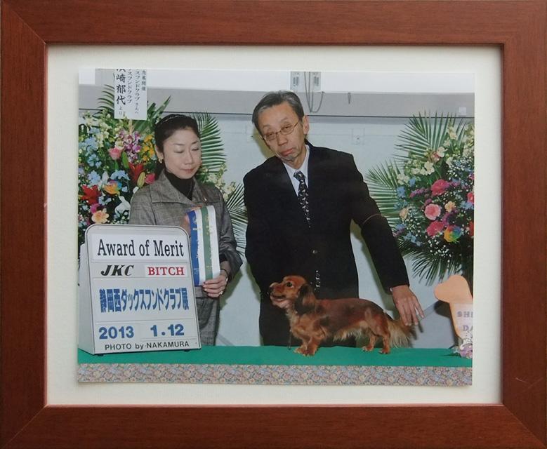 アリちゃん 犬種 カニンヘンダックス 3.0kg 女の子 コートカラー シェーデットレッド JKCチャンピオン