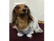 亜俐ちゃんのウエデングドレス姿