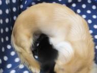 カニンヘン 小夏.ib & オスカルの赤ちゃん 11月6日生まれ