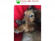 フジフォト大賞2016 審査発表