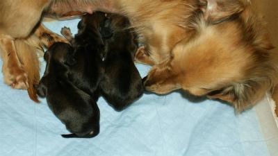 子犬 出産 ベルサス