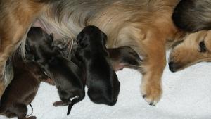 カニンヘンのユジンが11月16日出産しました