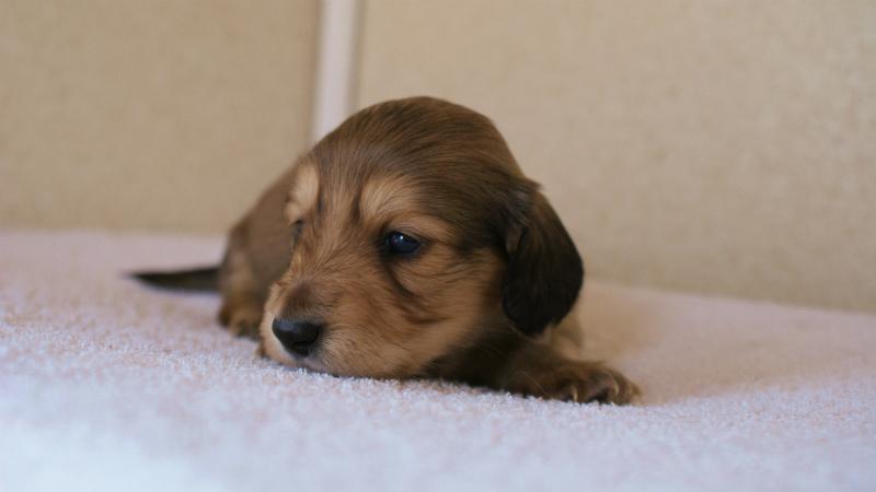 2011.12.30生まれカニンヘンのメロンのベビィです