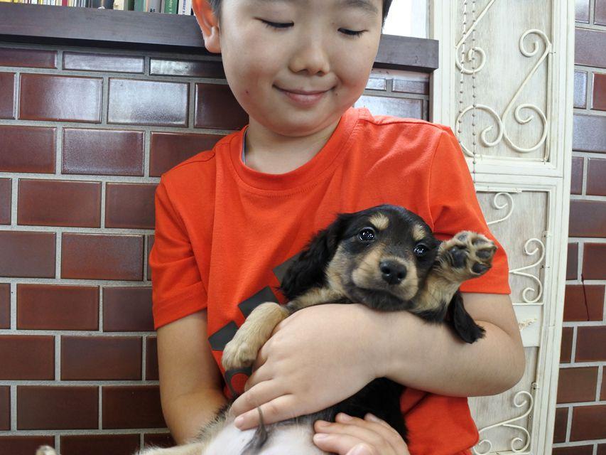 カニンヘンダックス ココ & ジャンの子犬 ブラックイエロー 男の子