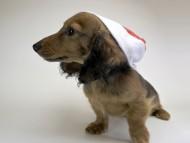 サリーアン & フレディの子犬 レッド 男の子(1) お写真初登場