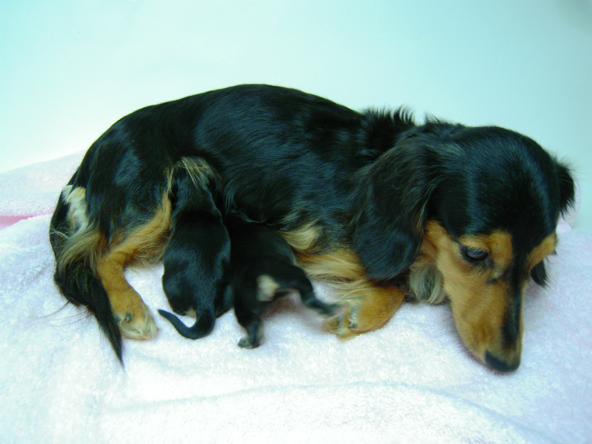 カニンヘンのマロが12月30日出産しました。