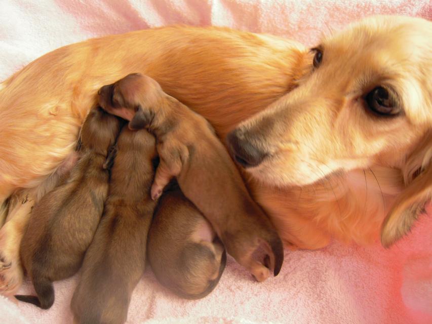 カニンヘンのマンドレが1月3日出産しました。