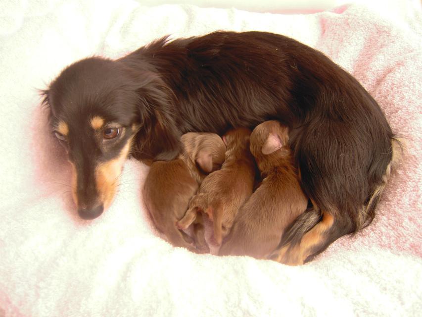 カニンヘンのイブが1月7日出産しました