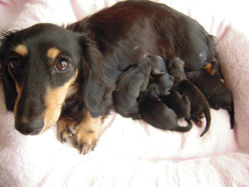 カニンヘンのしずるが11月18日出産しました