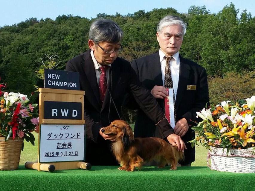 PUPU OF FUJI EARTH FIELD JP シェーデットレッド カニンヘンダックス 3.5kg JKCチャンピオン