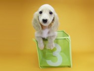 グリム & 武蔵の子犬 ピュアクリーム 女の子