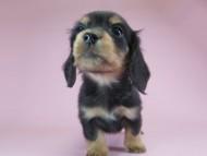 パン.2 & オスカルの子犬 ブラッククリーム 女の子