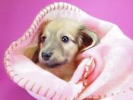 サリー.Ti & ボーイの子犬 シェーデットクリーム 女の子