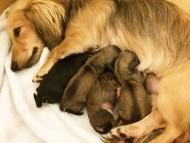 カニンヘン わかば 7/19出産しました ブラッククリーム女の子1、シェーデットクリーム女の子3