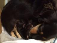 カニンヘン いちご 10/12出産しました