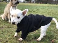 Crufts 2018 ロンドンで見かけた犬達