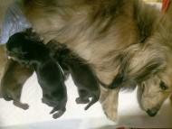 カニンヘンのキュリ 4/11出産しました。カラー考察中 男の子1 女の子2