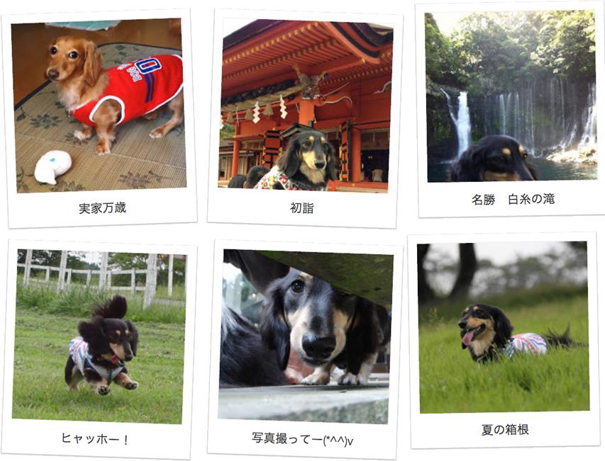 千葉県のお客様からミニチュアダックスのお写真をお送りいただきました