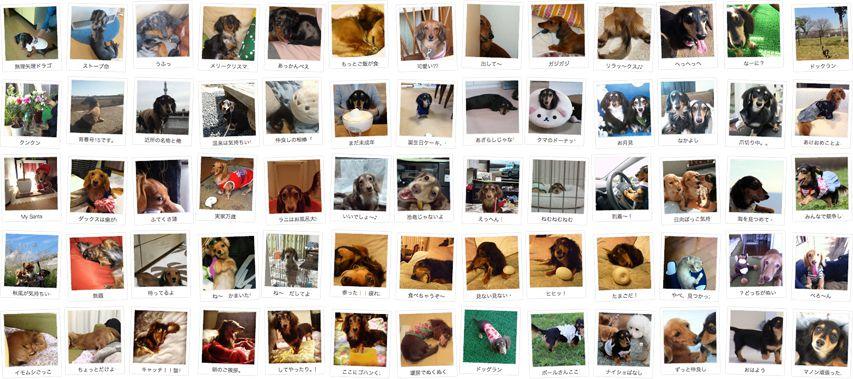 東京都のお客様へカニンヘン子犬のご案内