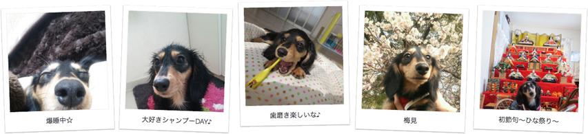 広島県のお客様からカニンヘンダックスのお写真をお送りいただきました