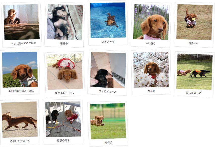 愛知県のお客様からミニチュアダックスのお写真をお送りいただきました