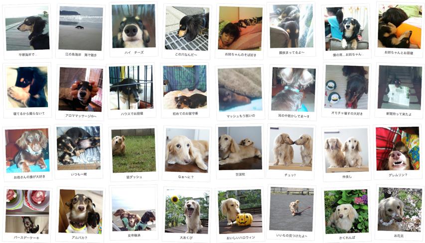 神奈川県のお客様からミニチュアダックスのお写真をお送りいただきました