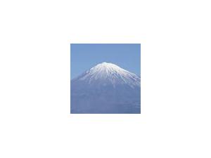 メルローズ カニンヘン 2.6キロ 超サイズ JKCチャンピオン武蔵直子 ブラックイエロー