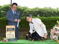 【ドッグショー】埼玉東オールドッグクラブ展 さくら.hb JKCチャンピオン完成