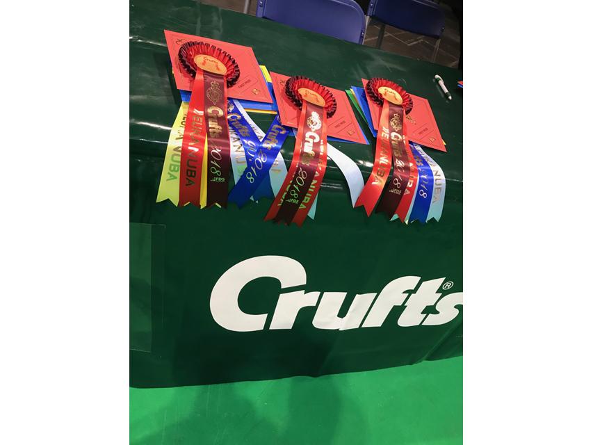 Crufts 2018 Crufts 2018 ミニチュアダックスフンド ロングヘアード 牝
