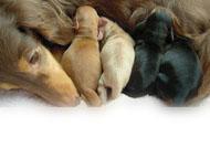 子犬の出産一覧 2014年