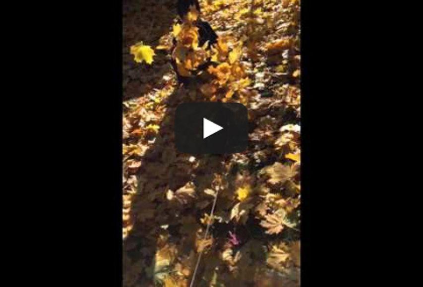 もも初めての秋 in Connecticut フジフォト大賞2015 動画部門賞