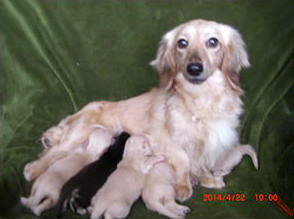 カニンヘンダックスのサリーが4月9日出産しました