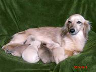 カニンヘンダックスのシェリー.Tiが4月18日出産しました