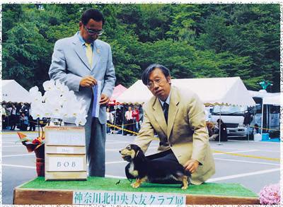 交配犬 JKCチャンピオン カニンヘン ダックスフンド 武蔵