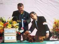 【ドッグショー】群馬中央コミュニティードッグクラブ展 ジムダンディ ウイナーズ