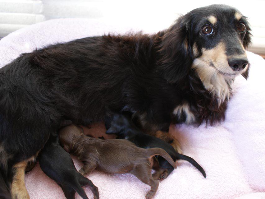 カニンヘンのななこが4月6日出産しました。